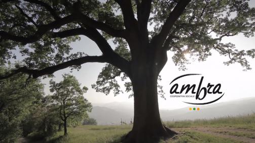 albero ambra